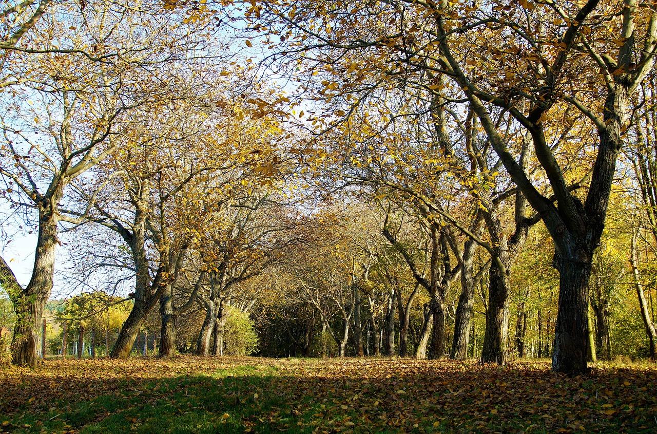 trees-4567241_1280.jpg